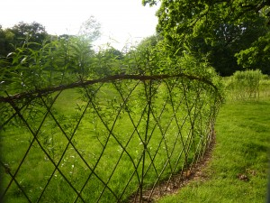 living willow fence 1